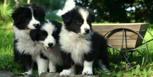 Smartest Easiest Trained Dogs