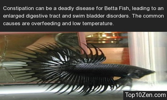 20 Interesting Betta Fish Facts To Better Know Your Betta