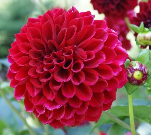 The 10 Most Beautiful Flowers In World With Outstanding