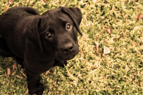 10 Considerations for Adopting a Pet from an Animal Shelter