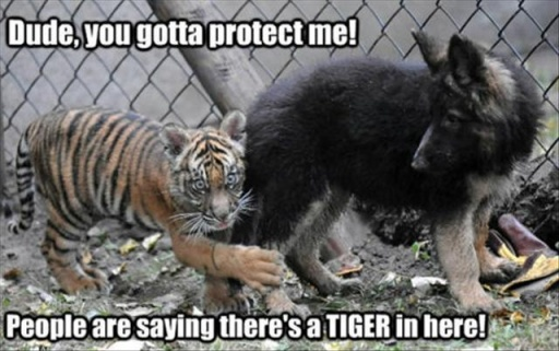 20 Funny Animal Pictures With Captions | Page 4 - Top10Zen